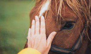 ZOMERACTIVITEIT - Kennismaken met Paarden als coach